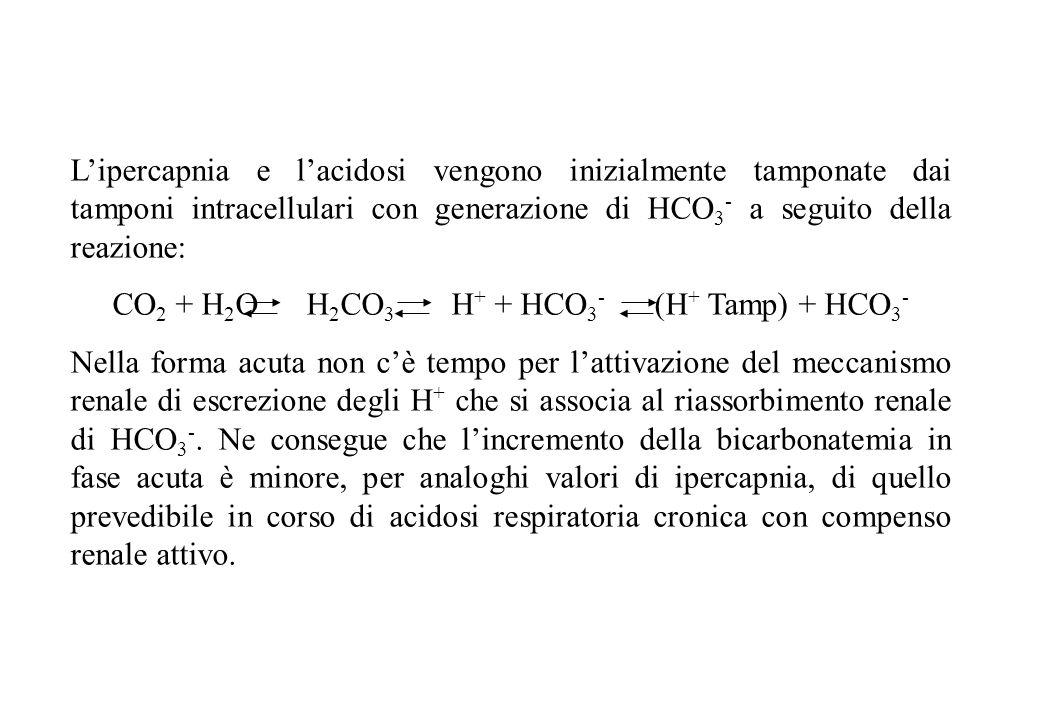Lipercapnia e lacidosi vengono inizialmente tamponate dai tamponi intracellulari con generazione di HCO 3 - a seguito della reazione: CO 2 + H 2 O H 2