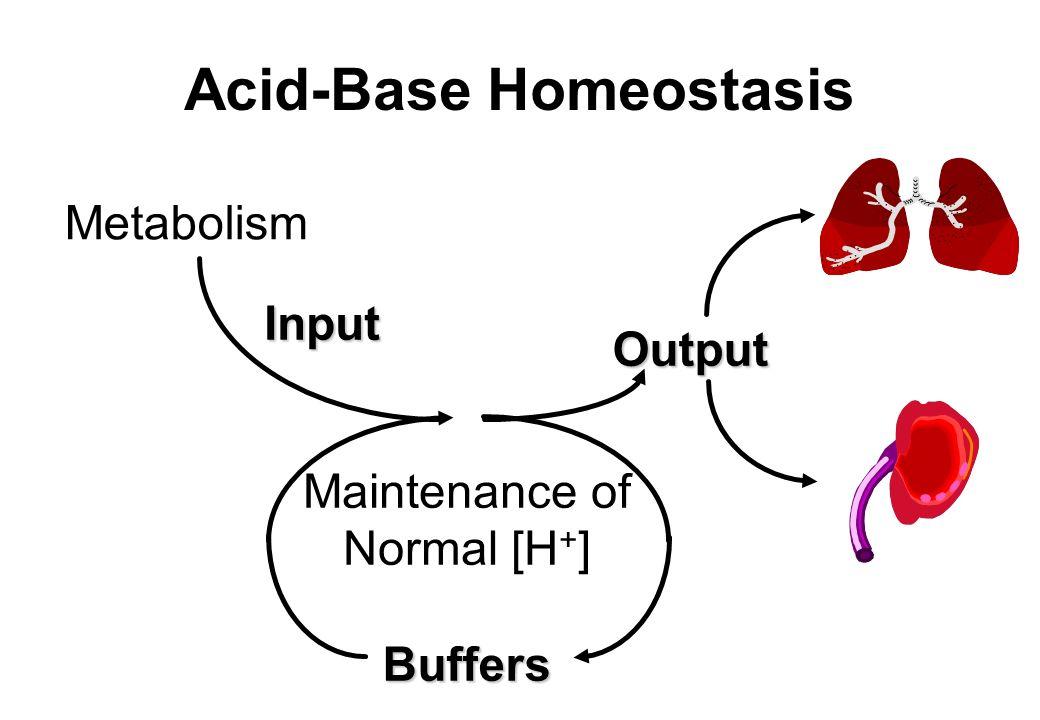Acid-Base Homeostasis Metabolism Input Output Maintenance of Normal [H + ] Buffers