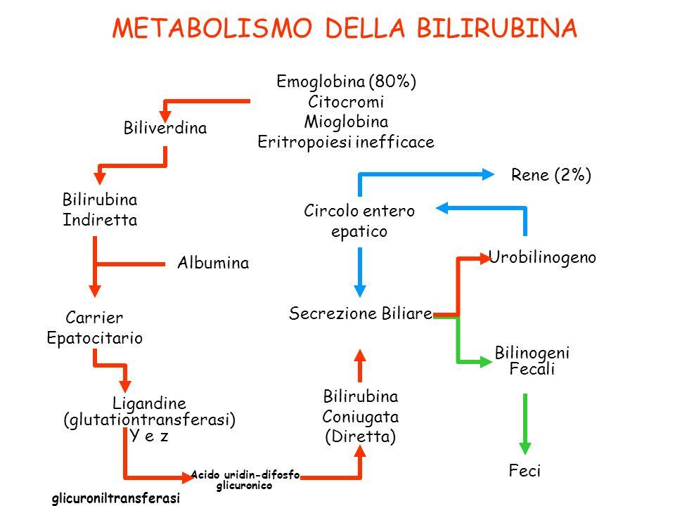 METABOLISMO DELLA BILIRUBINA Biliverdina Bilirubina Indiretta Albumina Carrier Epatocitario Ligandine (glutationtransferasi) Y e z Acido uridin-difosf