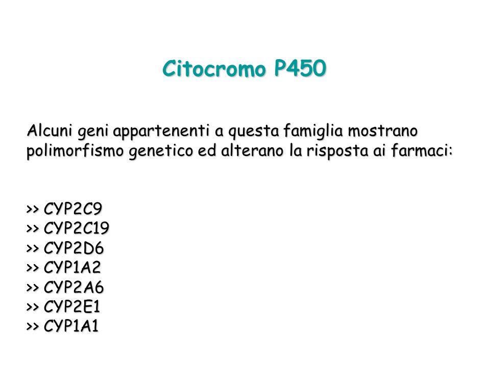 Citocromo P450 Alcuni geni appartenenti a questa famiglia mostrano polimorfismo genetico ed alterano la risposta ai farmaci: >> CYP2C9 >> CYP2C19 >> C