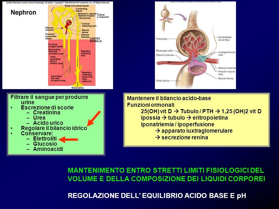 diminuzione del volume dellacqua (1-2%) aumento dellosmolalità centro della sete** (nervo vago, glosso faringeo, nuclei ipot.) 1.stimolazione degli osmorecettori ipotalamici 2.aumentata produzione di ADH 3.aumentato riassorbimento di acqua nel neurone distale 4.stimolazione dei barorecettori 5.inibizione della secrezione di renina (aldosterone) **il centro della sete è localizzato nellarea pre-ottica e la parte anteroventrale del terzo ventricolo.