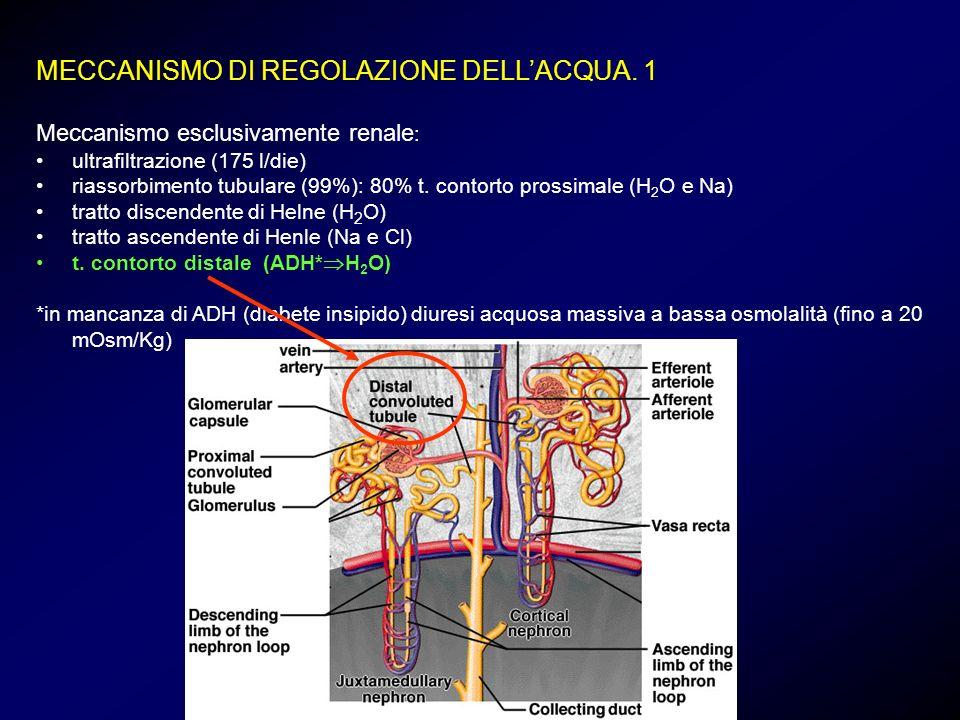MECCANISMO DI REGOLAZIONE DELLACQUA. 1 Meccanismo esclusivamente renale : ultrafiltrazione (175 l/die) riassorbimento tubulare (99%): 80% t. contorto