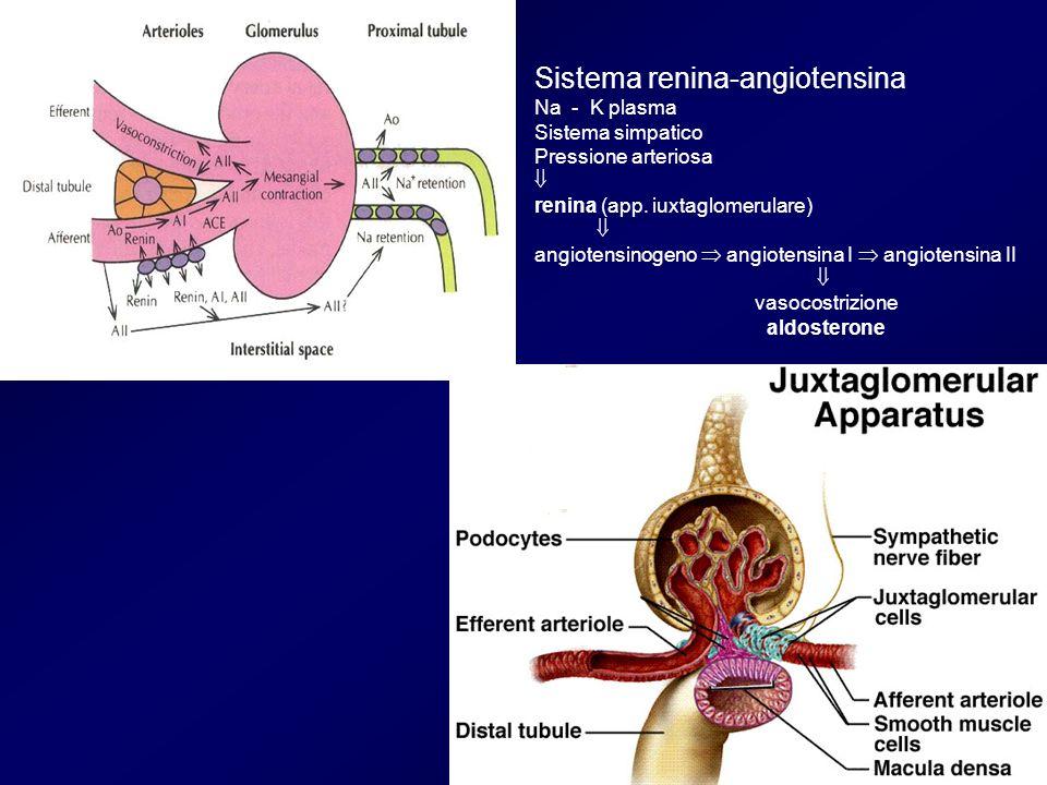 Sistema renina-angiotensina Na - K plasma Sistema simpatico Pressione arteriosa renina (app. iuxtaglomerulare) angiotensinogeno angiotensina I angiote