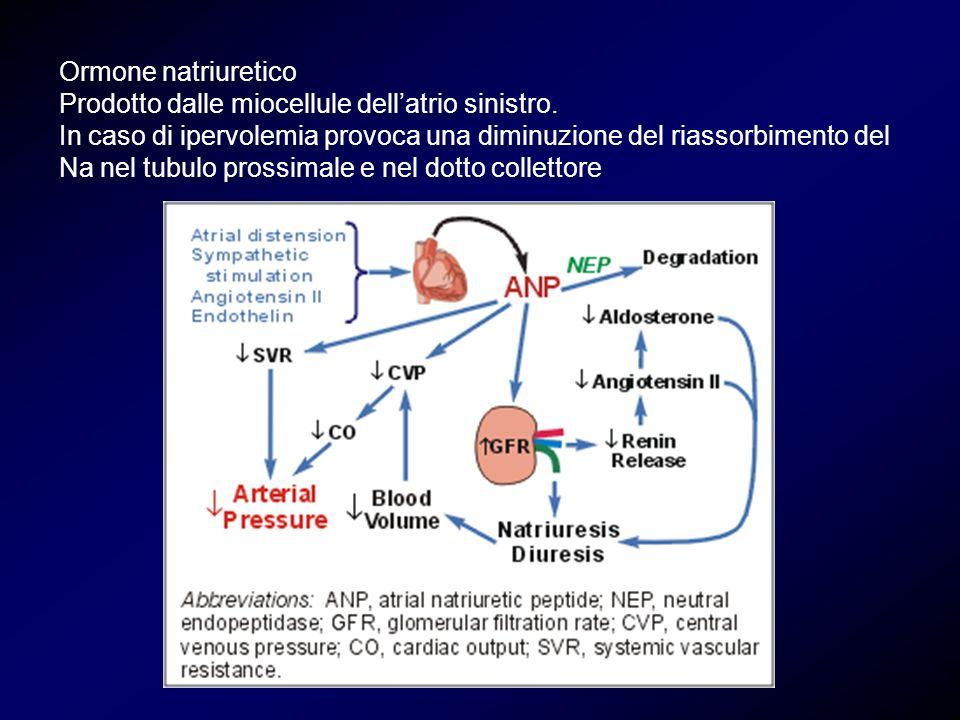 Ormone natriuretico Prodotto dalle miocellule dellatrio sinistro. In caso di ipervolemia provoca una diminuzione del riassorbimento del Na nel tubulo
