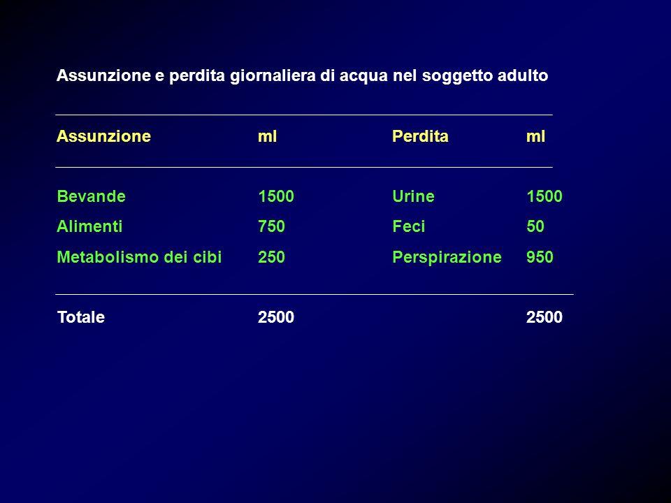 Totale CEC CIC Corporeo Sodio (mmol)28002300500 Potassio (mmol)300060 2840 Acqua (L)4014 26