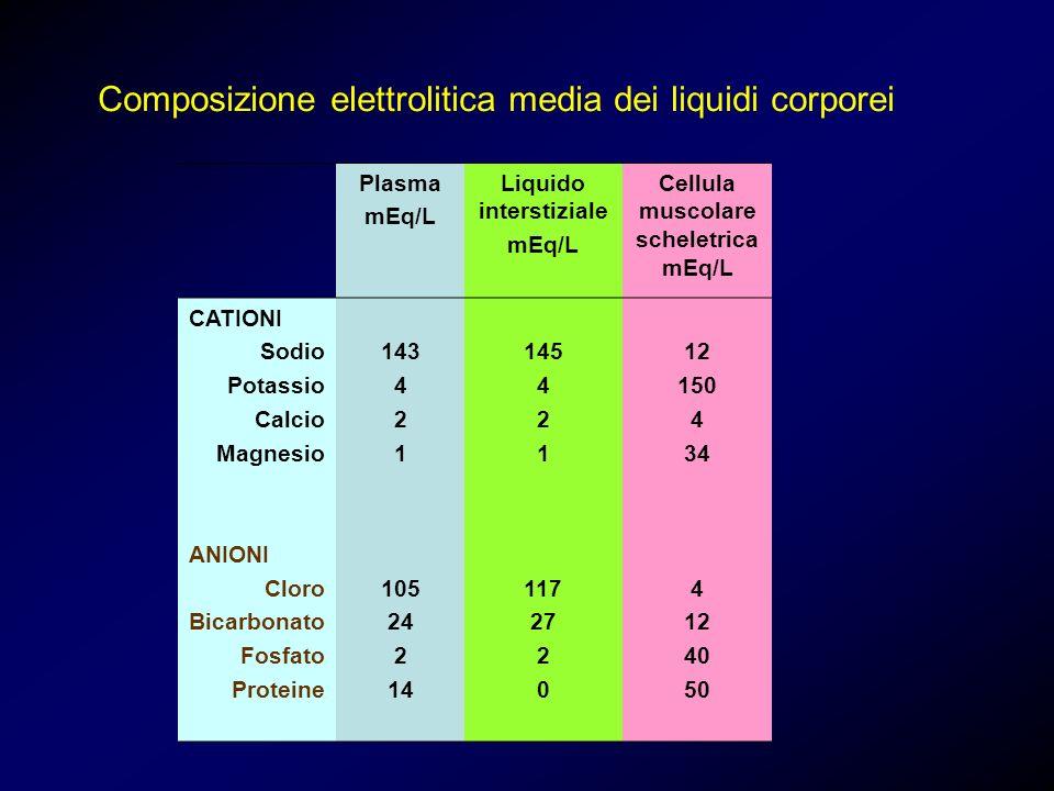 Plasma mEq/L Liquido interstiziale mEq/L Cellula muscolare scheletrica mEq/L CATIONI Sodio Potassio Calcio Magnesio ANIONI Cloro Bicarbonato Fosfato P