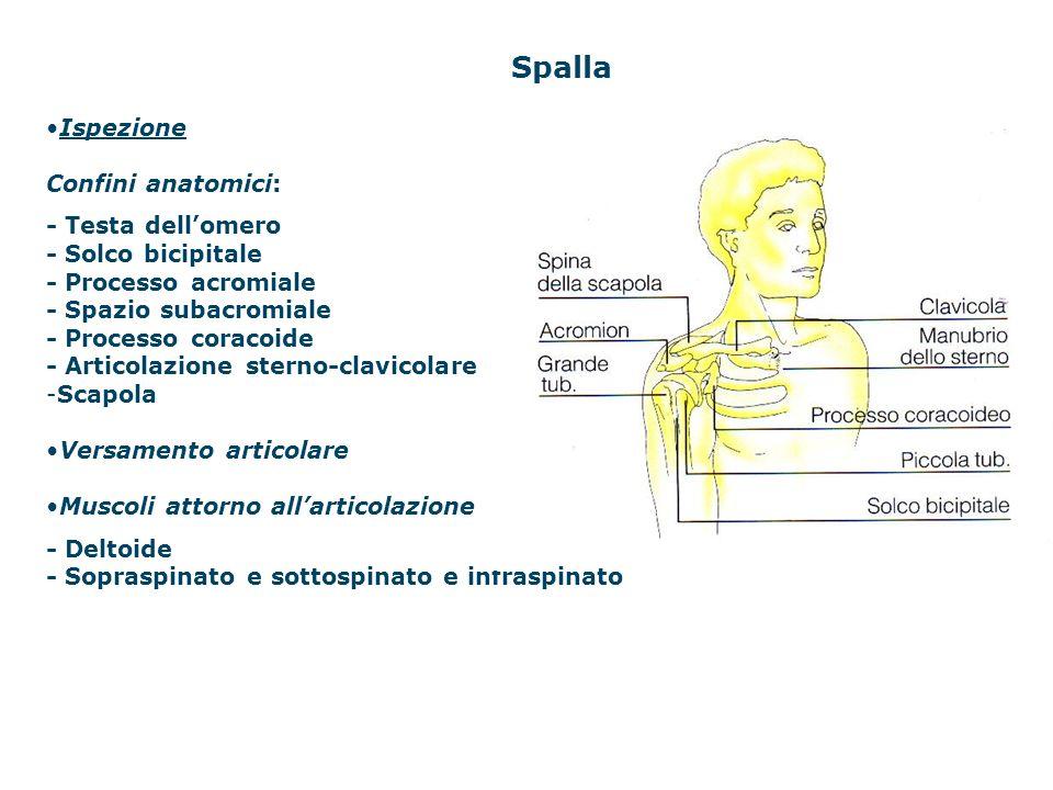 Spalla Ispezione Confini anatomici: - Testa dellomero - Solco bicipitale - Processo acromiale - Spazio subacromiale - Processo coracoide - Articolazio