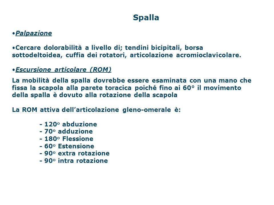 Spalla Palpazione Cercare dolorabilità a livello di; tendini bicipitali, borsa sottodeltoidea, cuffia dei rotatori, articolazione acromioclavicolare.