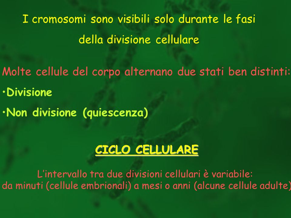Molte cellule del corpo alternano due stati ben distinti: Divisione Non divisione (quiescenza) CICLO CELLULARE Lintervallo tra due divisioni cellulari