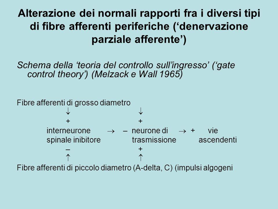 Alterazione dei normali rapporti fra i diversi tipi di fibre afferenti periferiche (denervazione parziale afferente) Schema della teoria del controllo