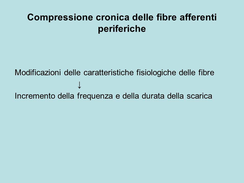 Compressione cronica delle fibre afferenti periferiche Modificazioni delle caratteristiche fisiologiche delle fibre Incremento della frequenza e della