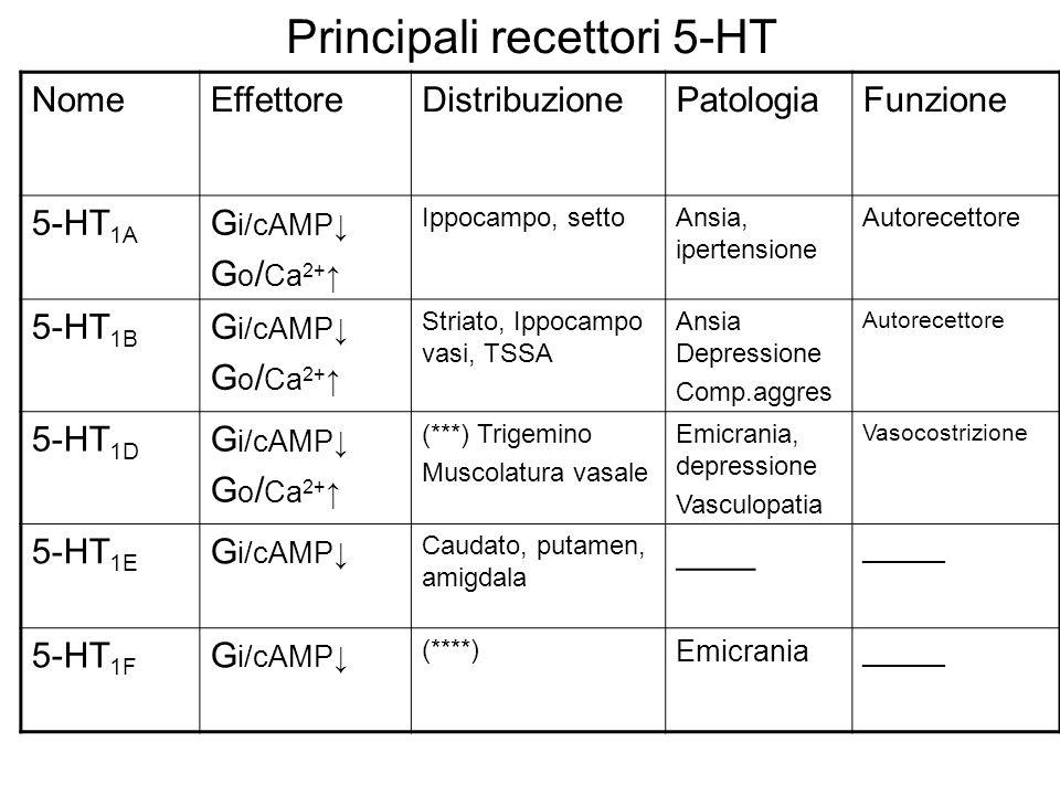 Principali recettori 5-HT NomeEffettoreDistribuzionePatologiaFunzione 5-HT 1A G i/cAMP G o / Ca 2+ Ippocampo, settoAnsia, ipertensione Autorecettore 5