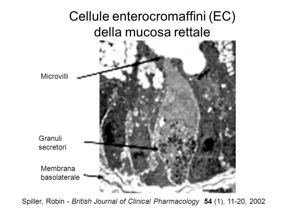 Microvilli Granuli secretori Membrana basolaterale Spiller, Robin - British Journal of Clinical Pharmacology 54 (1), 11-20, 2002 Cellule enterocromaff