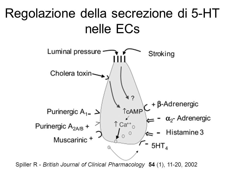 Spiller R - British Journal of Clinical Pharmacology 54 (1), 11-20, 2002 Regolazione della secrezione di 5-HT nelle ECs