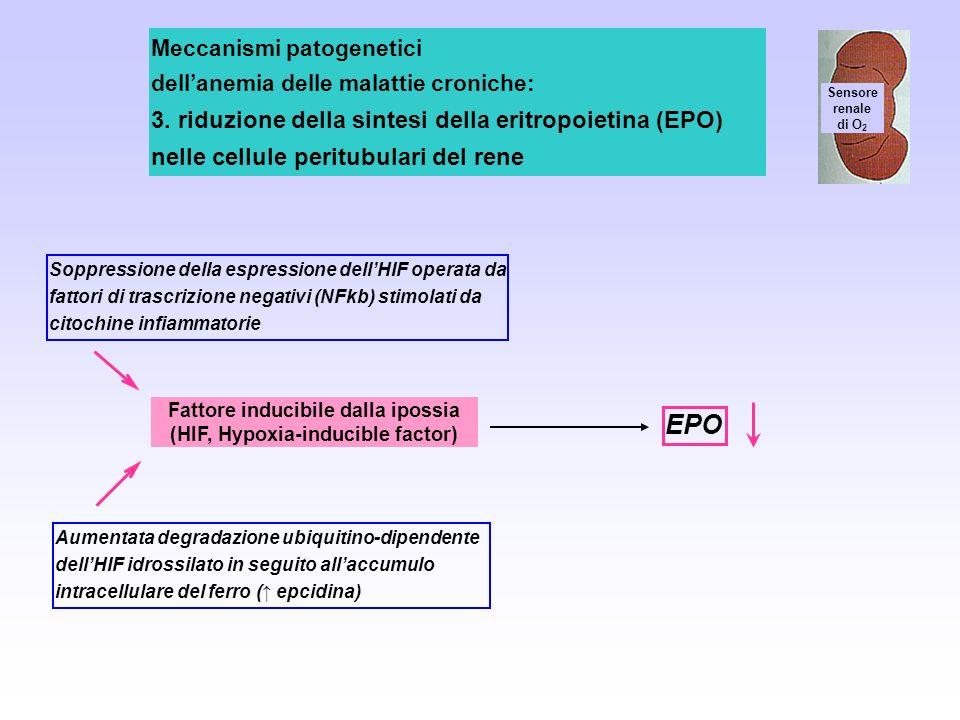 Sensore renale di O 2 Meccanismi patogenetici dellanemia delle malattie croniche: 3. riduzione della sintesi della eritropoietina (EPO) nelle cellule