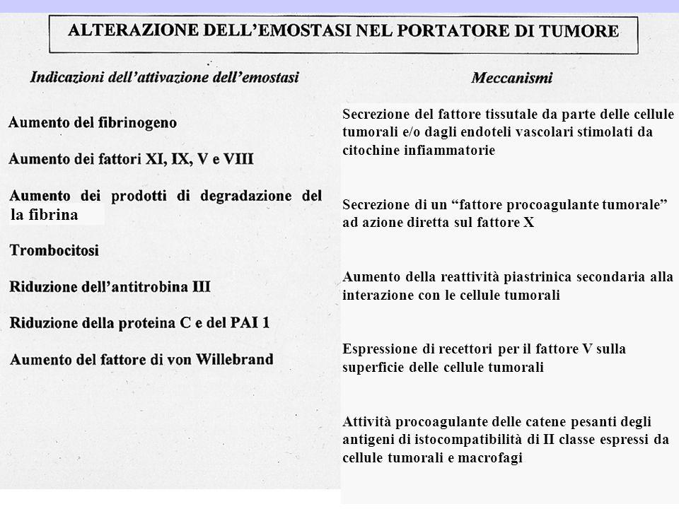 Secrezione del fattore tissutale da parte delle cellule tumorali e/o dagli endoteli vascolari stimolati da citochine infiammatorie Secrezione di un fa