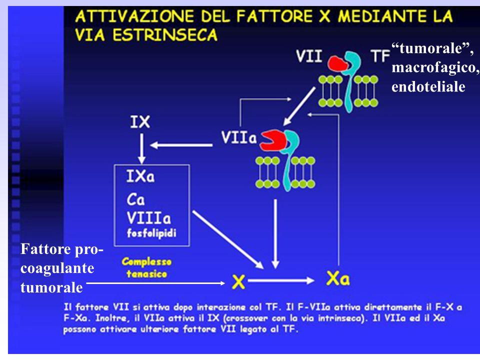 tumorale, macrofagico, endoteliale Fattore pro- coagulante tumorale
