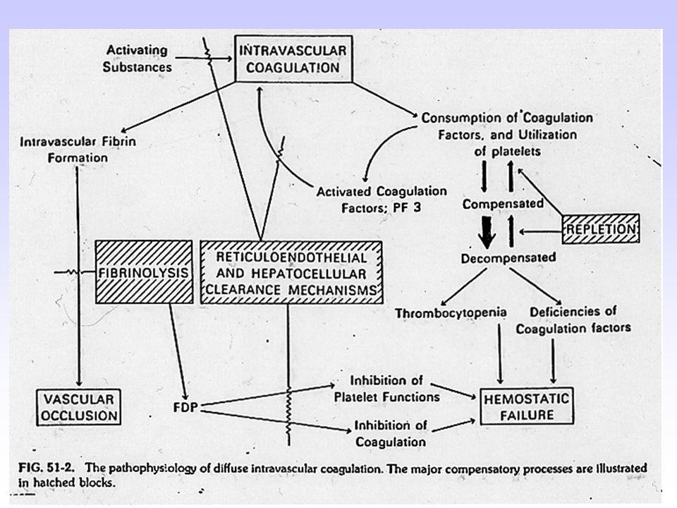 IL-10 Ferro legato alla transferrina IL-6 IL-1 TNF- Interferon- Recettore della transferrina Macrophage Degradazione e fagocitosi di eritrociti senescenti Trasportatore di metalli divalenti Ferroportina 1 Aumento della ferritina Aumento delFe2+ IL-10 Fegato Epcidina Stomaco Duodeno Riduzione dellassorbimento del Fe2+ Ferro legato alla transferrina Fe2+ LPS IL-6 IL-1 Monocyte Recettore della transferrina Macrophage Trasportatore di metalli divalenti Ferroportina 1 Epcidina Riduzione del rilascio del Fe Aumento della ferritina Aumento delFe2+ Meccanismi patogenetici dellanemia delle malattie croniche: 2.