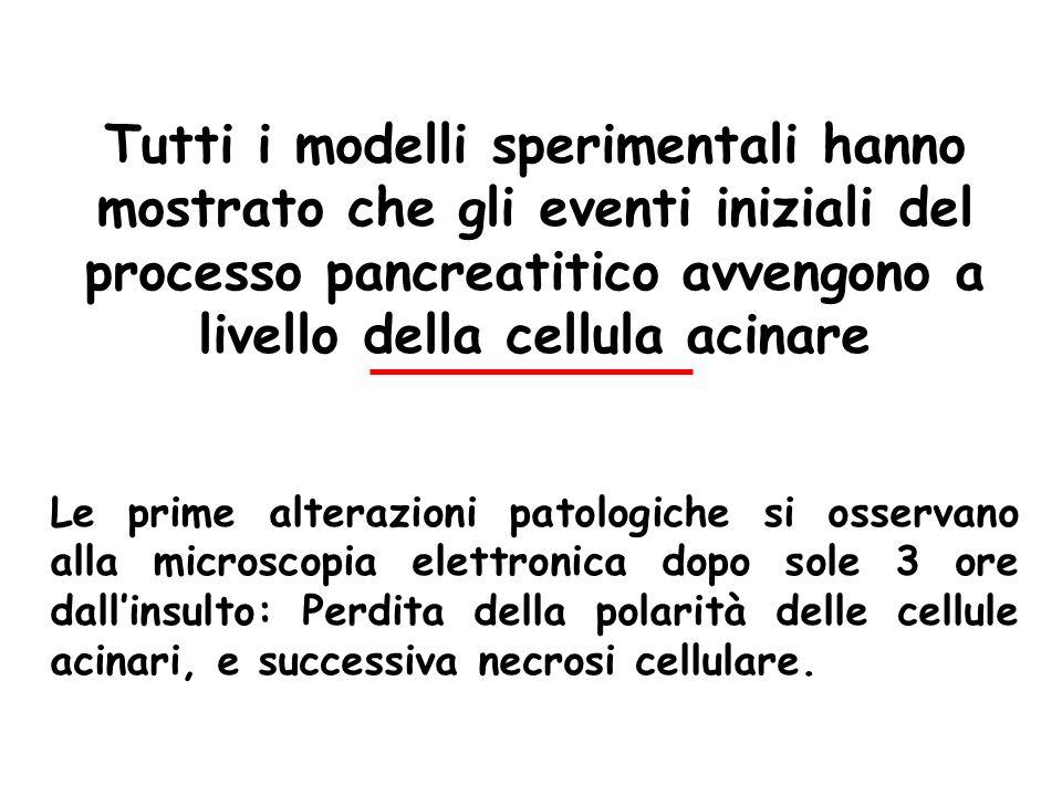 Tutti i modelli sperimentali hanno mostrato che gli eventi iniziali del processo pancreatitico avvengono a livello della cellula acinare Le prime alte