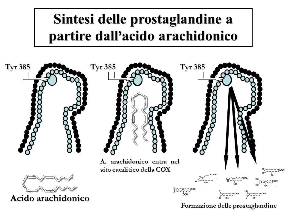 Sintesi delle prostaglandine a partire dall acido arachidonico Tyr 385 Acido arachidonico Tyr 385 A.