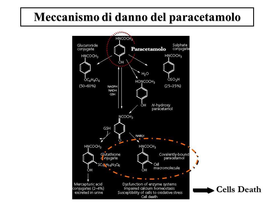 Meccanismo di danno del paracetamolo Paracetamolo Cells Death
