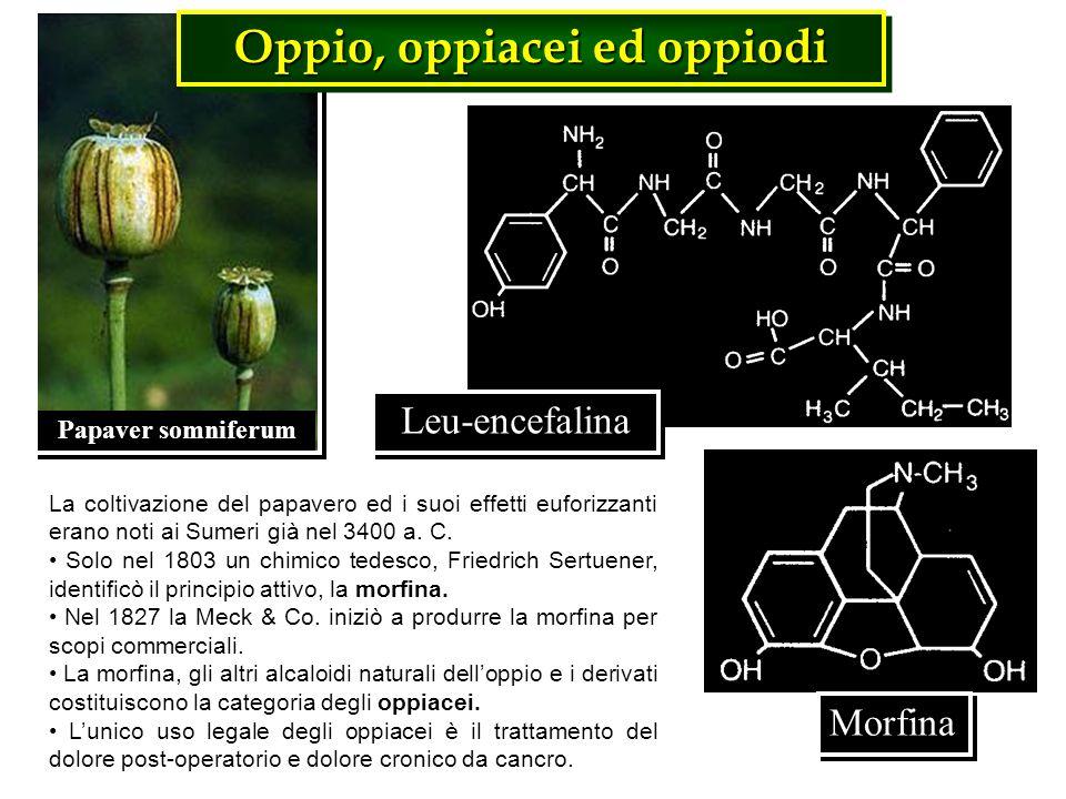 Papaver somniferum Leu-encefalina Oppio, oppiacei ed oppiodi La coltivazione del papavero ed i suoi effetti euforizzanti erano noti ai Sumeri già nel