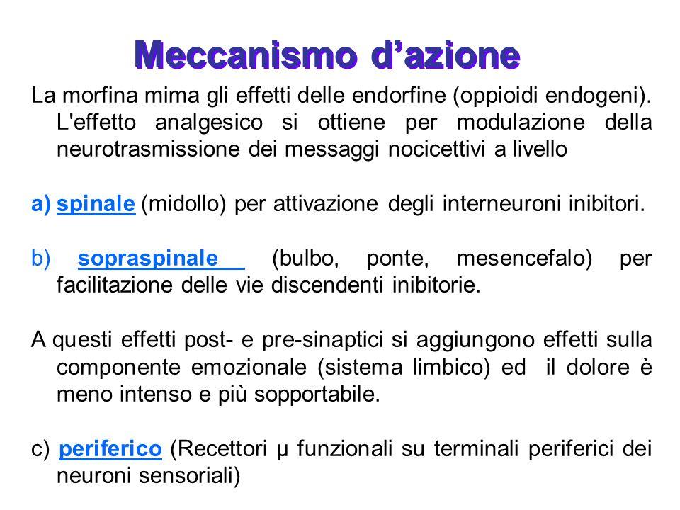 La morfina mima gli effetti delle endorfine (oppioidi endogeni). L'effetto analgesico si ottiene per modulazione della neurotrasmissione dei messaggi