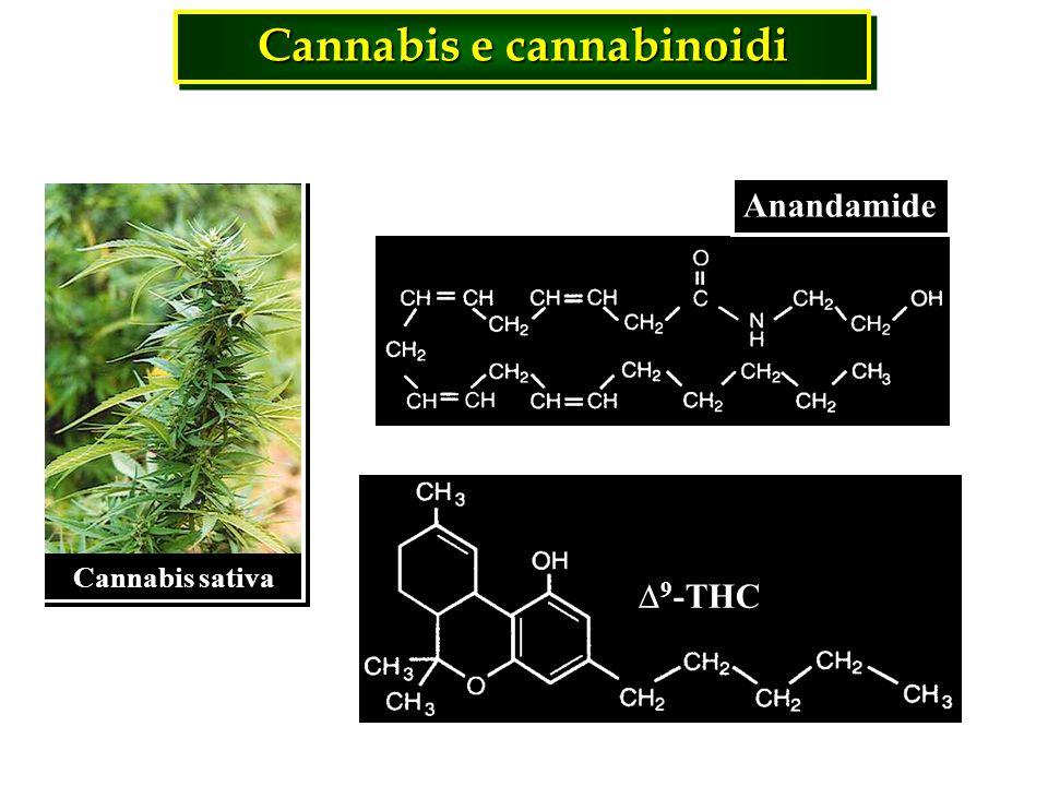 Cannabis e cannabinoidi 9 -THC Anandamide Cannabis sativa