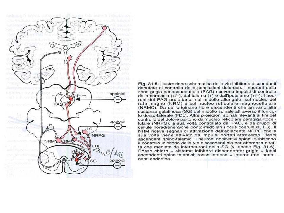 Il metadone ha una durata di azione di 8 ore circa ed ha una ottima biodisponibilità orale.