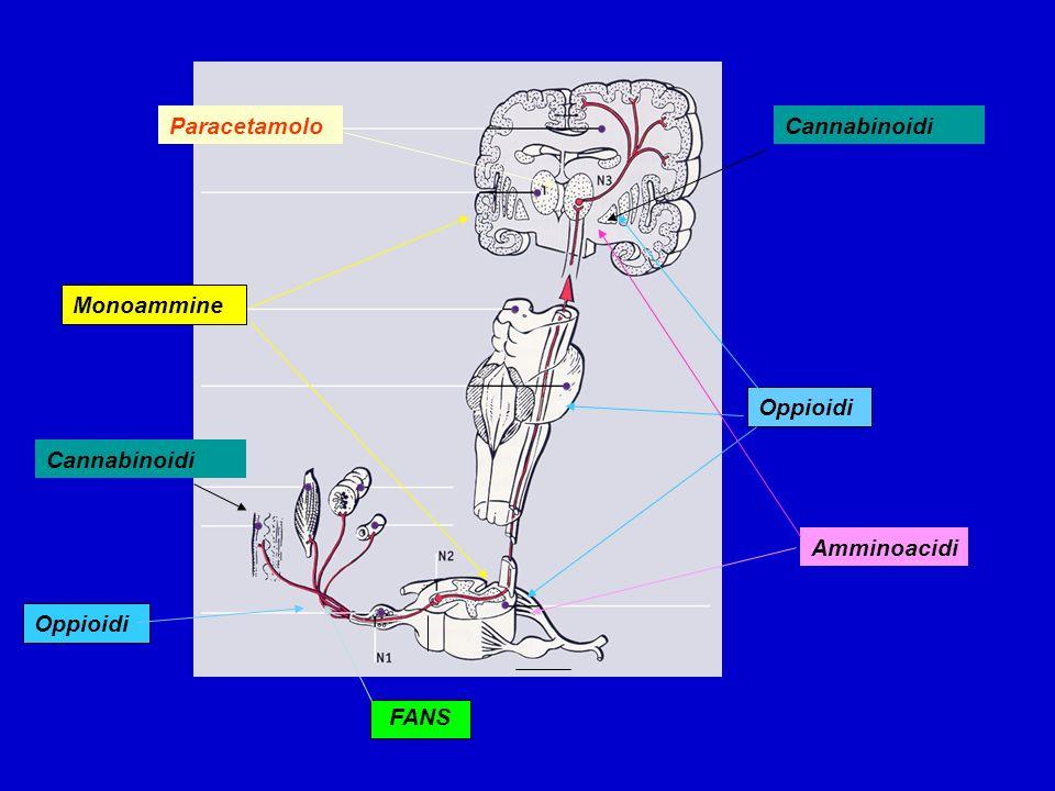 Oppioidi Monoammine FANS Oppioidi Amminoacidi ParacetamoloCannabinoidi