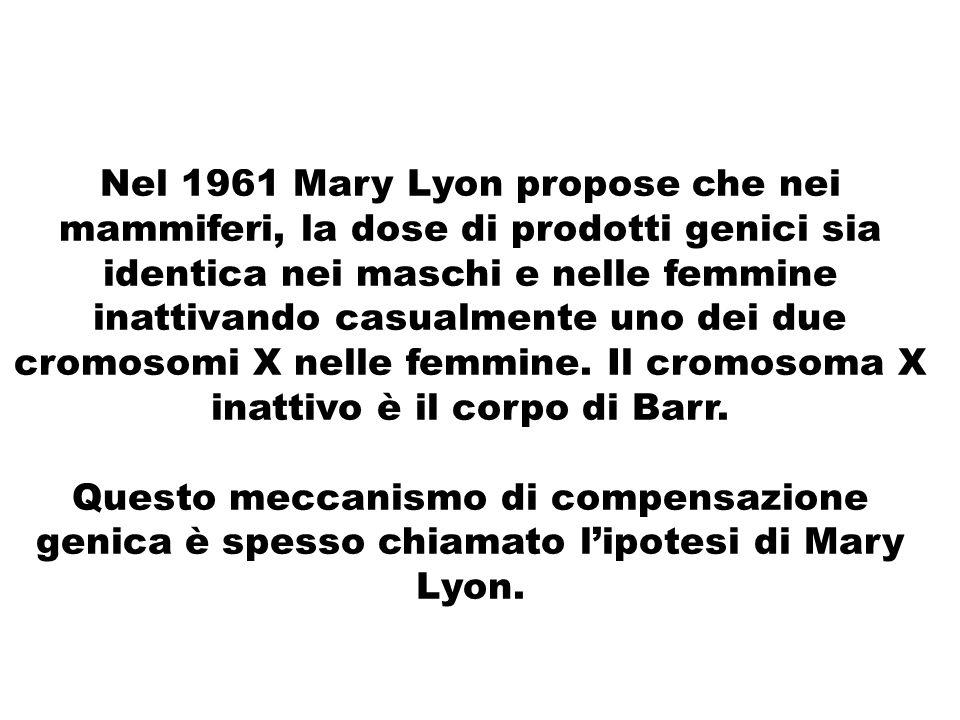 Nel 1961 Mary Lyon propose che nei mammiferi, la dose di prodotti genici sia identica nei maschi e nelle femmine inattivando casualmente uno dei due c