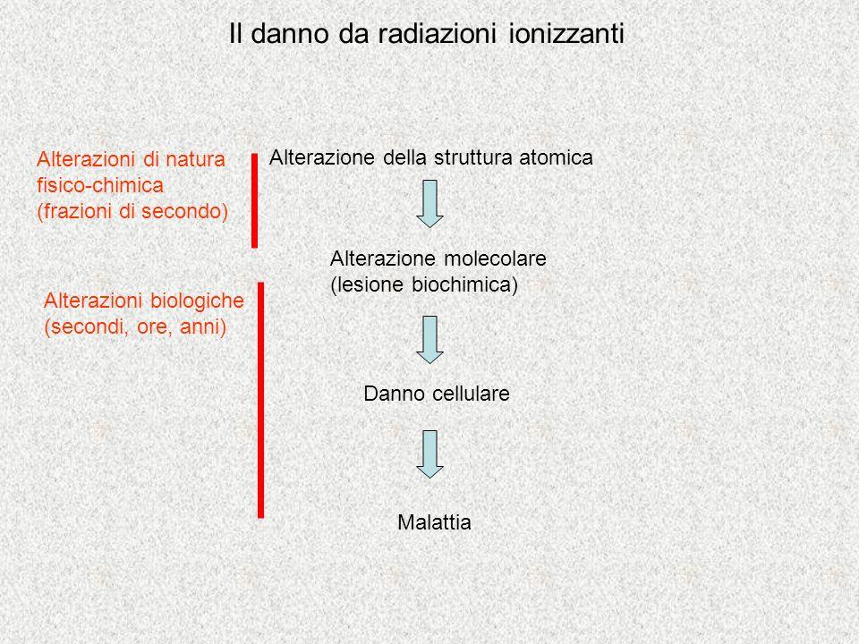 Il danno da radiazioni ionizzanti Alterazione della struttura atomica Alterazione molecolare (lesione biochimica) Danno cellulare Malattia Alterazioni