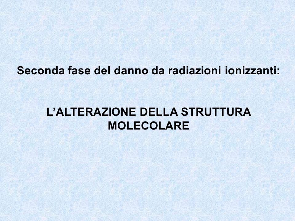 Seconda fase del danno da radiazioni ionizzanti: LALTERAZIONE DELLA STRUTTURA MOLECOLARE