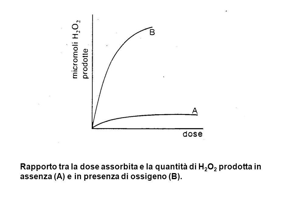 Rapporto tra la dose assorbita e la quantità di H 2 O 2 prodotta in assenza (A) e in presenza di ossigeno (B).