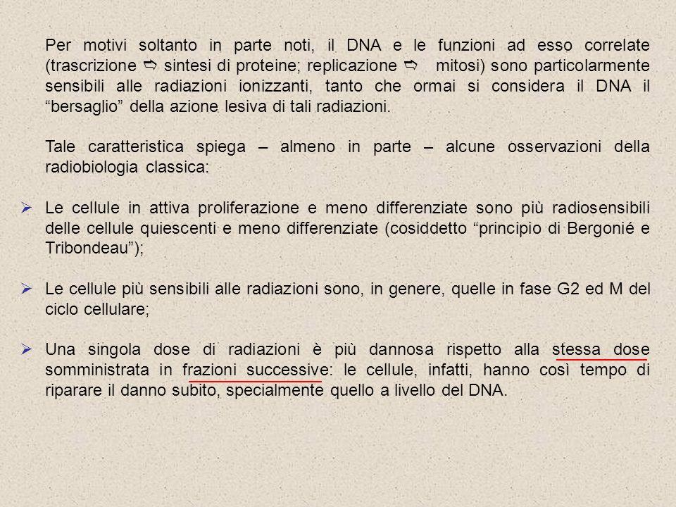 Per motivi soltanto in parte noti, il DNA e le funzioni ad esso correlate (trascrizione sintesi di proteine; replicazione mitosi) sono particolarmente