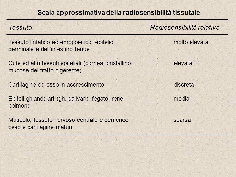 Scala approssimativa della radiosensibilità tissutale TessutoRadiosensibilità relativa Tessuto linfatico ed emopoietico, epitelio molto elevata germin