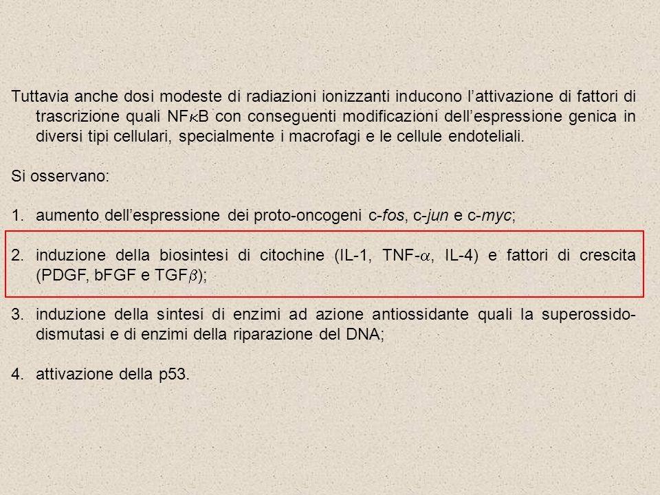 Tuttavia anche dosi modeste di radiazioni ionizzanti inducono lattivazione di fattori di trascrizione quali NF B con conseguenti modificazioni dellesp