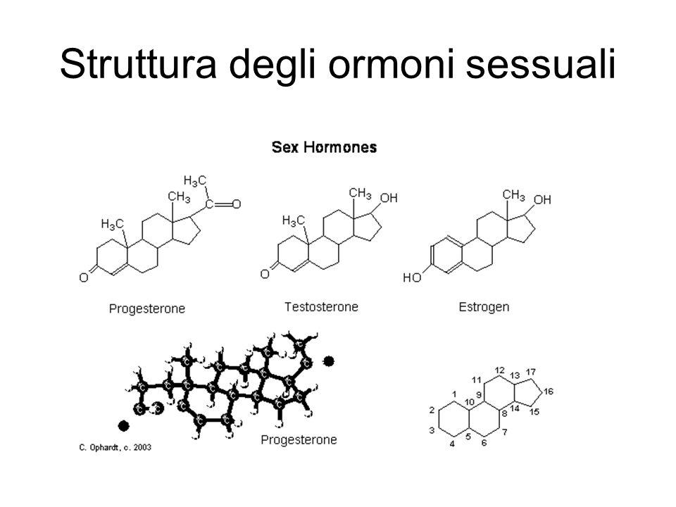 Ormoni maschili ( androgeni) Ormoni maschile Sintetizzati dalle cellule di Leydig testicolare e dal corticosurrene Effetti anabolizzanti Naturali e sintetici