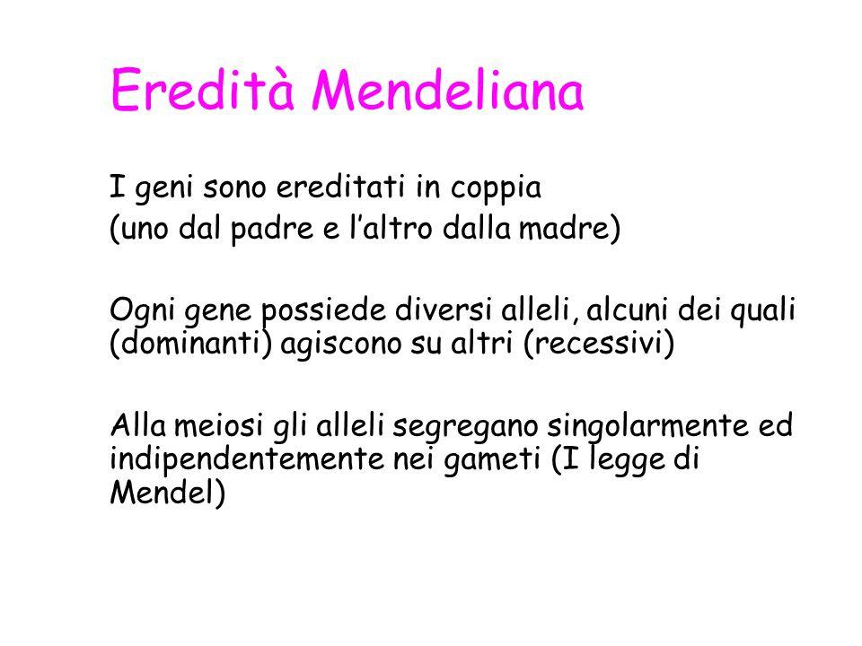 Eredità Mendeliana I geni sono ereditati in coppia (uno dal padre e laltro dalla madre) Ogni gene possiede diversi alleli, alcuni dei quali (dominanti