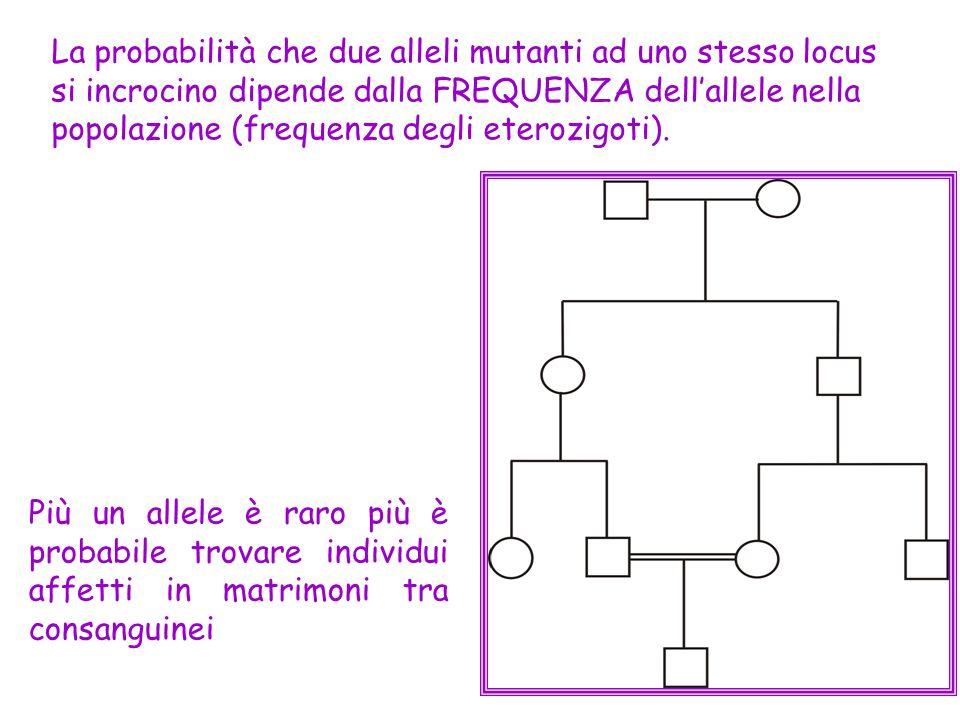 Più un allele è raro più è probabile trovare individui affetti in matrimoni tra consanguinei La probabilità che due alleli mutanti ad uno stesso locus