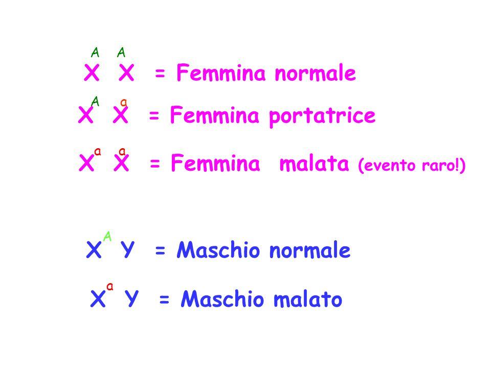 X X = Femmina normale X X = Femmina portatrice X X = Femmina malata (evento raro!) X Y = Maschio normale X Y = Maschio malato A A a aa A a