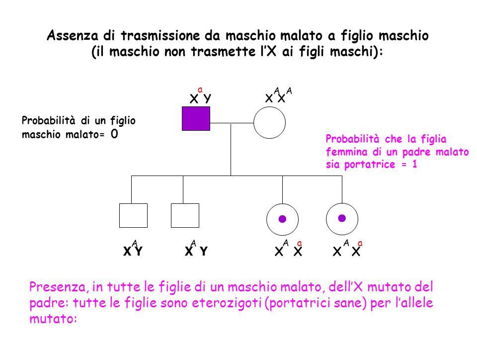 Assenza di trasmissione da maschio malato a figlio maschio (il maschio non trasmette lX ai figli maschi): Probabilità di un figlio maschio malato= 0 X