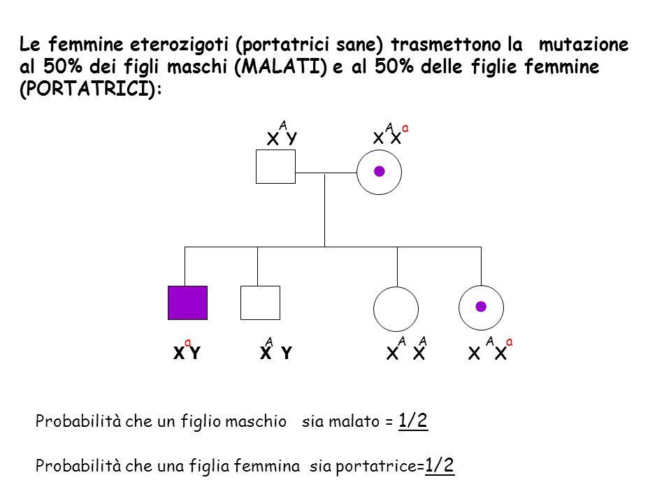 X Y X X Y A A a X X a A A A A a.. Le femmine eterozigoti (portatrici sane) trasmettono la mutazione al 50% dei figli maschi (MALATI) e al 50% delle fi