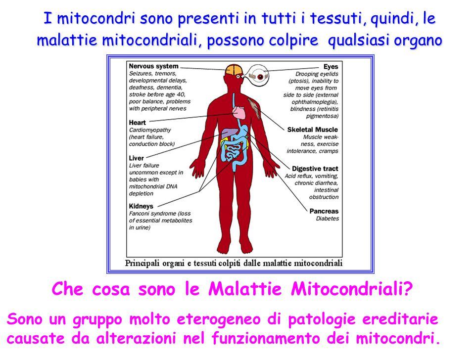 I mitocondri sono presenti in tutti i tessuti, quindi, le malattie mitocondriali, possono colpire qualsiasi organo Che cosa sono le Malattie Mitocondr