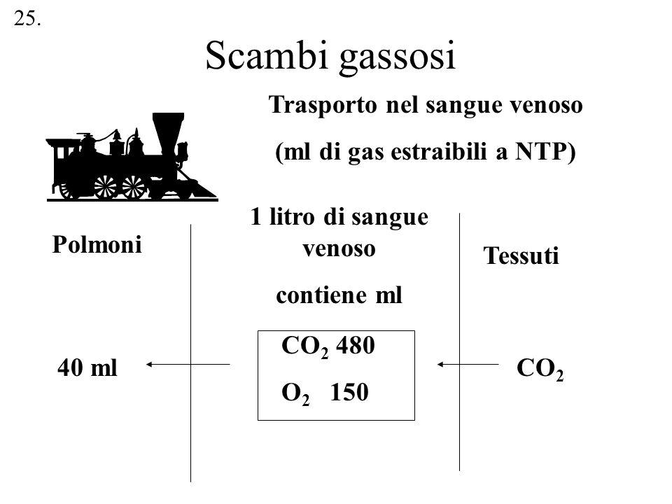 Scambi gassosi Trasporto nel sangue venoso (ml di gas estraibili a NTP) Polmoni 1 litro di sangue venoso contiene ml CO 2 CO 2 480 O 2 150 40 ml Tessu