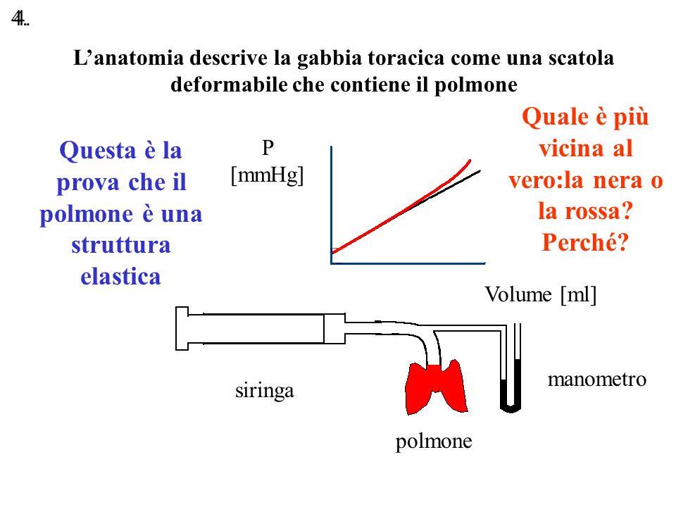 Lanatomia descrive la gabbia toracica come una scatola deformabile che contiene il polmone P [mmHg] Volume [ml] siringa polmone manometro Questa è la