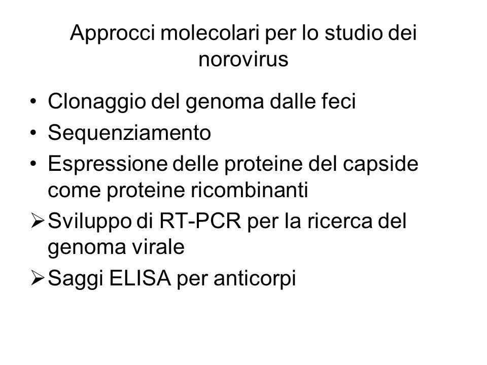Approcci molecolari per lo studio dei norovirus Clonaggio del genoma dalle feci Sequenziamento Espressione delle proteine del capside come proteine ri