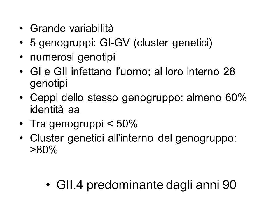 Grande variabilità 5 genogruppi: GI-GV (cluster genetici) numerosi genotipi GI e GII infettano luomo; al loro interno 28 genotipi Ceppi dello stesso g