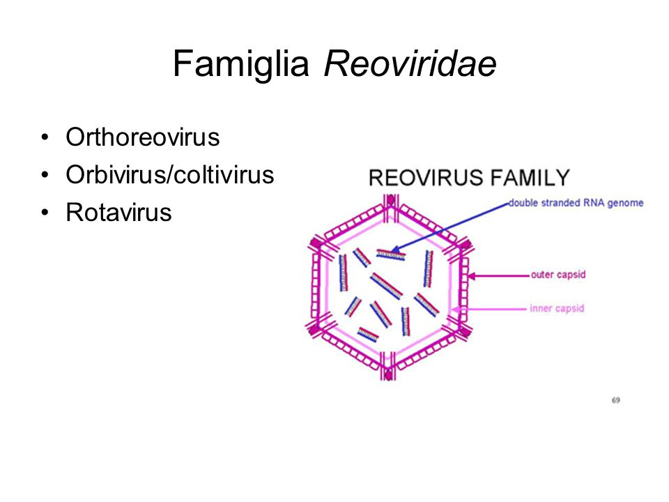Famiglia Reoviridae Orthoreovirus Orbivirus/coltivirus Rotavirus