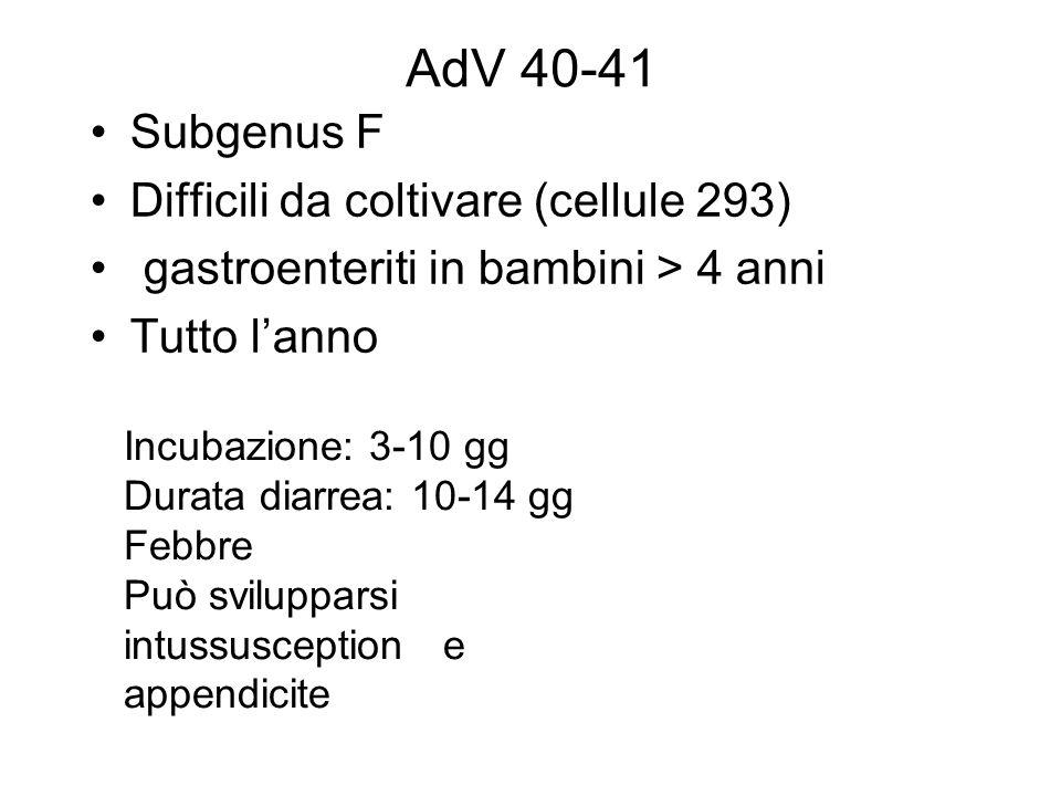 AdV 40-41 Subgenus F Difficili da coltivare (cellule 293) gastroenteriti in bambini > 4 anni Tutto lanno Incubazione: 3-10 gg Durata diarrea: 10-14 gg